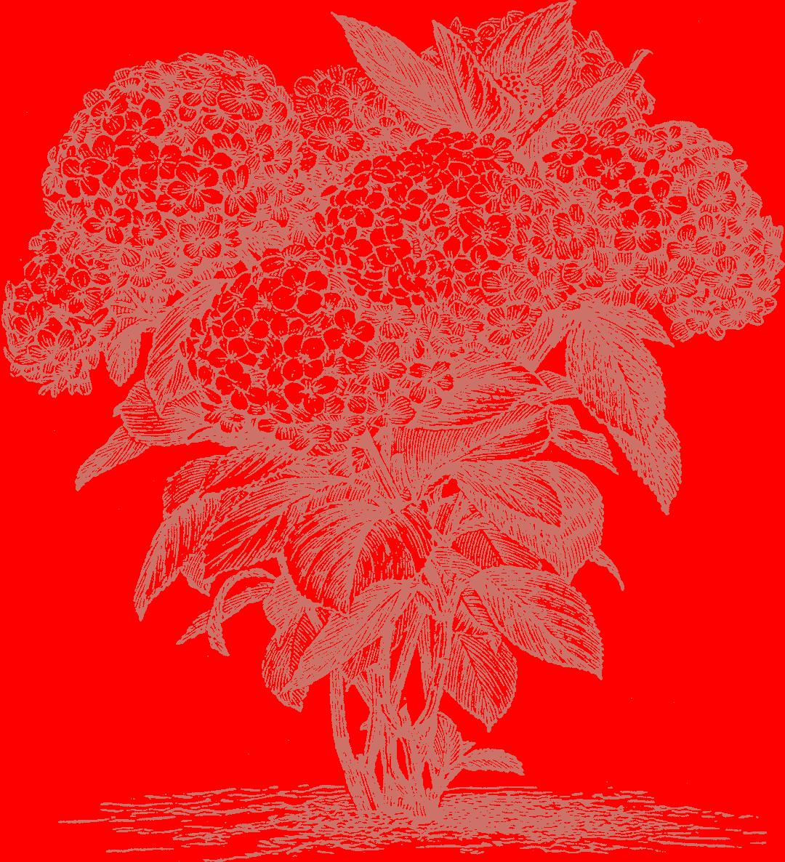 Blueskin Nurseries has Otago's biggest range of trees and shrubs