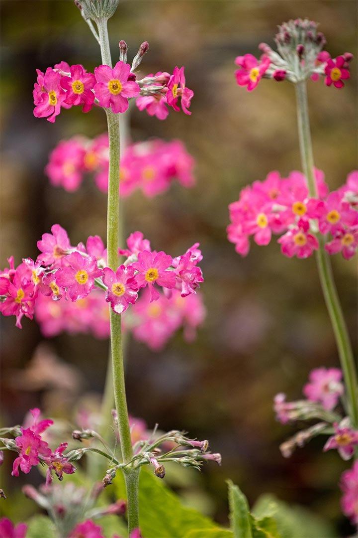 gome flowers image