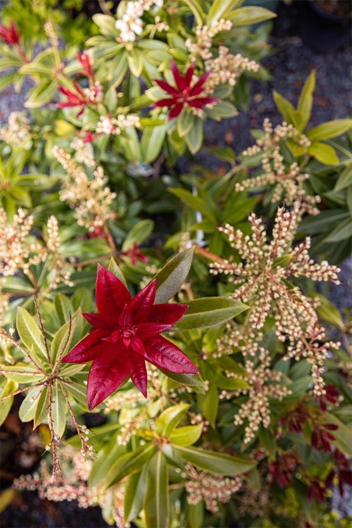home garden centre plant