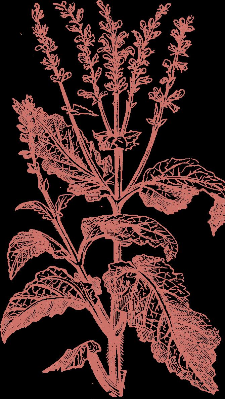 Blueskin nurseries illustration
