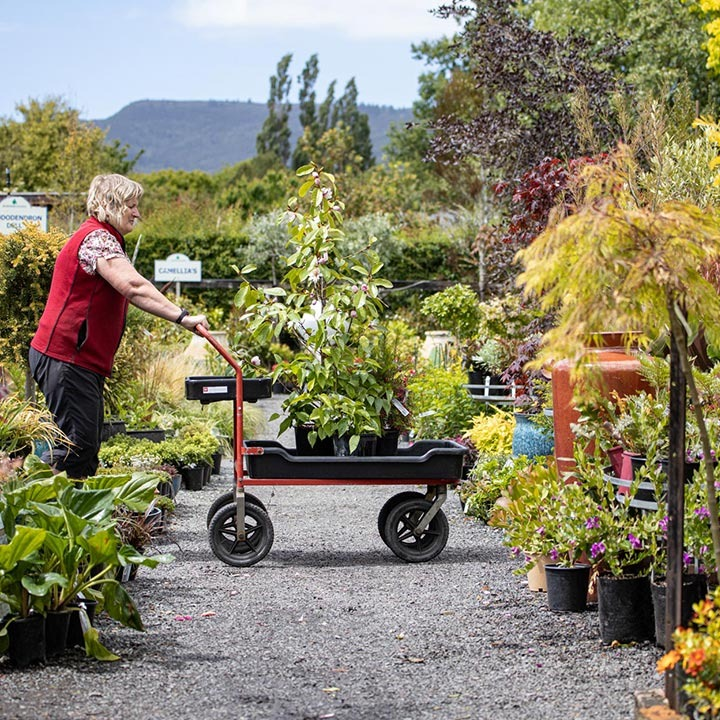 pushing trolley plant